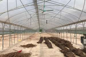 GREENHOUSES DRYING