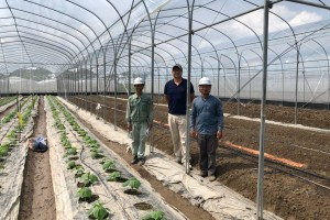 Thai Son Breeding Service Cooperative - Safe Vegetable, Tuber and Fruit Production Area